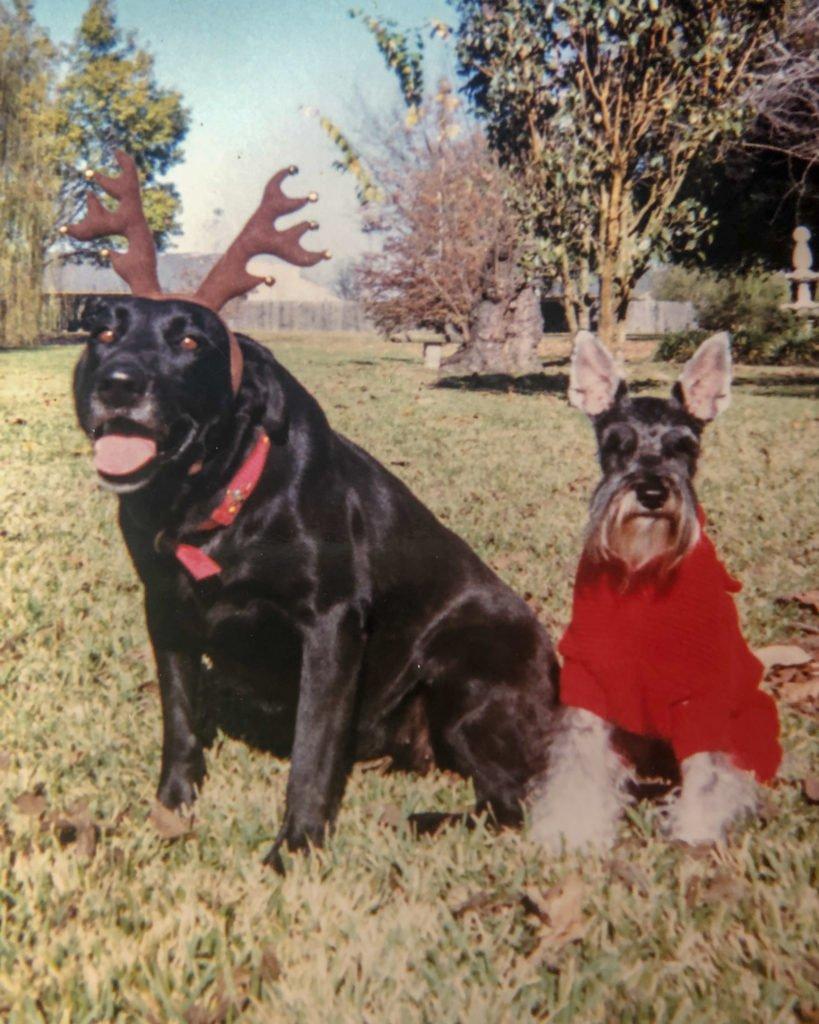 dog wearing antlers dog wearing sweater
