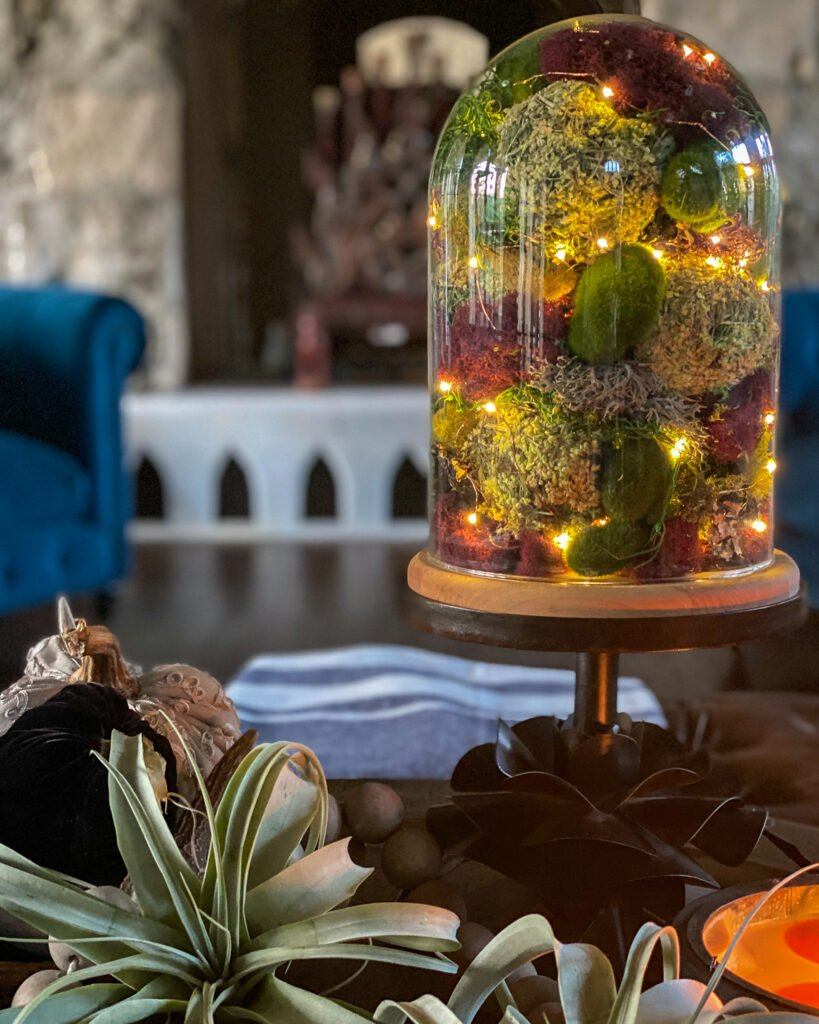 fall cloche with battery operated lights and air plants - J Dub By Design
