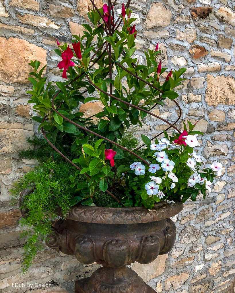 Mandevilla with periwnkles and asparagus fern - J Dub By Design