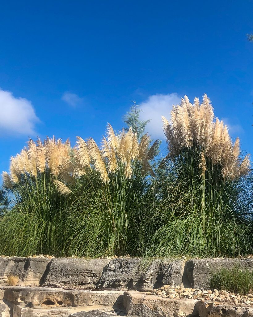 pampas grass bushes in rock garden - J Dub By Design™