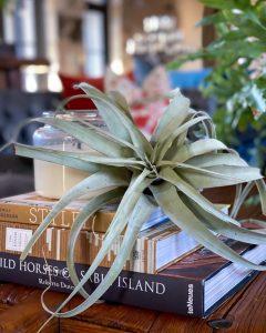 Tillandsia on stack of books - J Dub By Design™