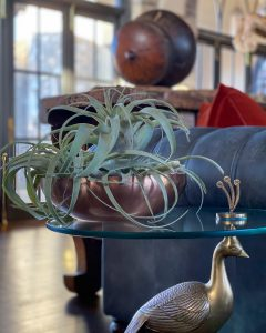 tillandsia in bowl on table - J Dub By Design™