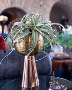 Tillandsia in copper planter - J Dub By Design™