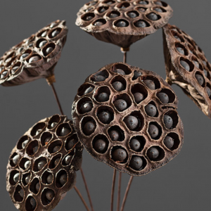 brown dried lotus pods - J Dub By Design2