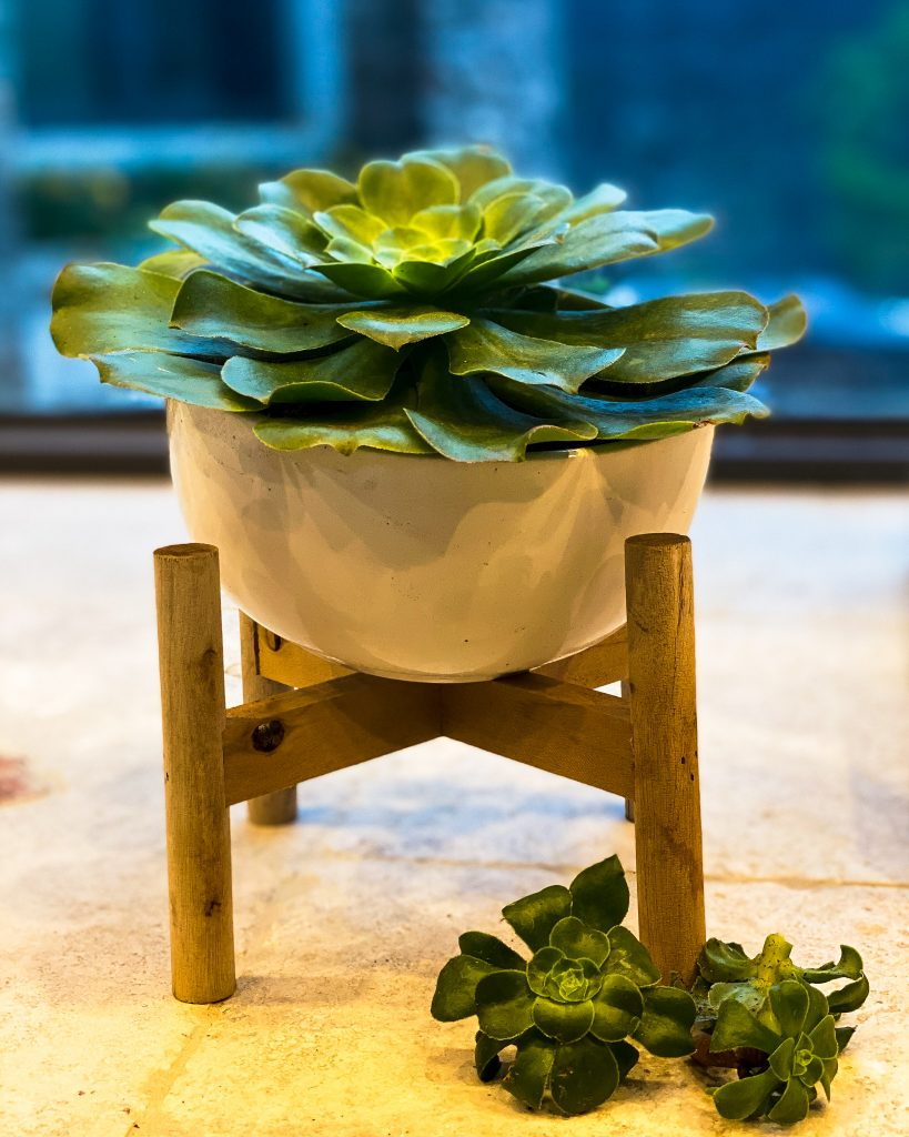 a freshly re-potted succulent with three baby succulents - J Dub By Design™