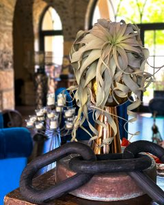 air plant and large black wood rings on sofa table - J Dub By Design™