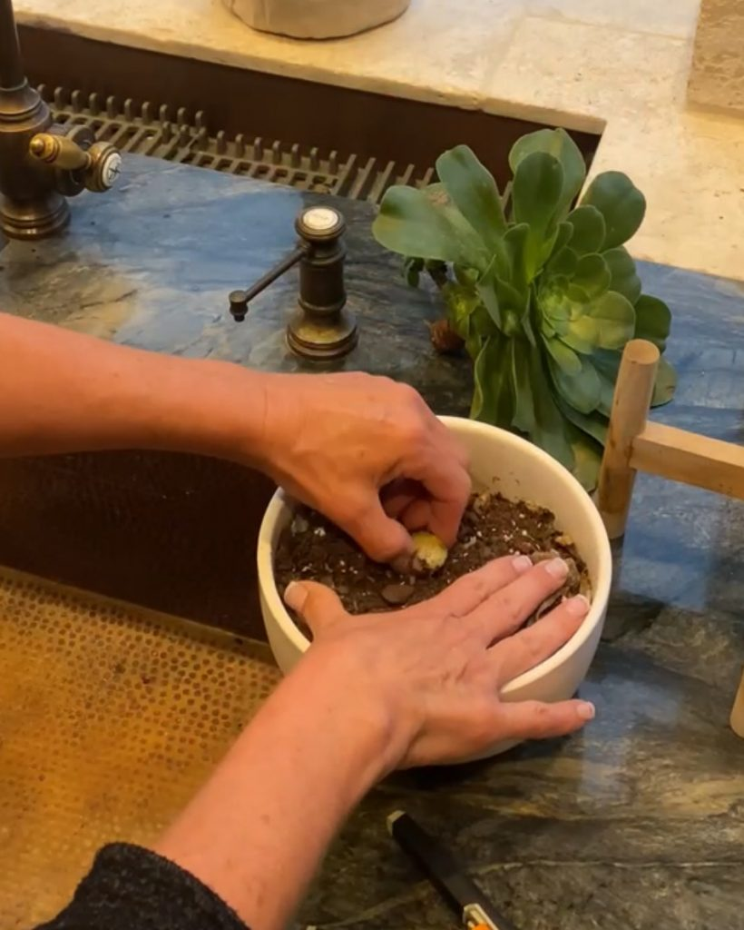 removing a succulent stalk from a pot - J Dub By Design™