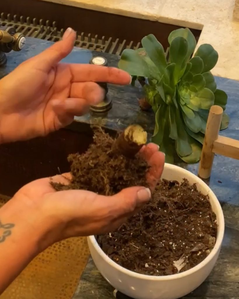 holding a succulent stalk in the palm of my hand - J Dub By Design™