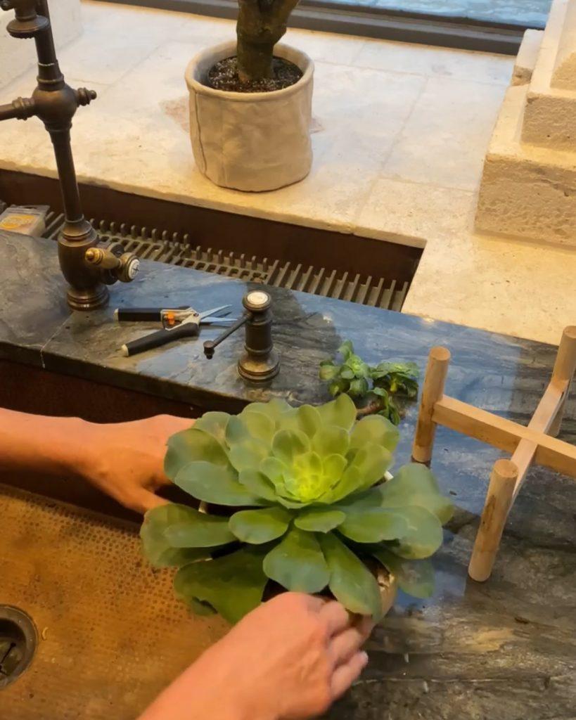 re-potting a freshly trimmed succulent - J Dub By Design™