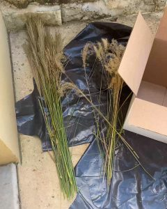 several varieties of Miscanthus grass that have been cut and are waiting to be dyed - J Dub By Design™