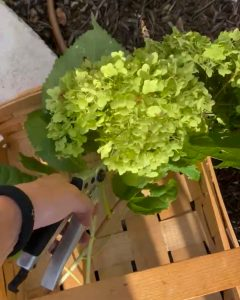 placing hydrangea blooms in a basket - J Dub By Design™